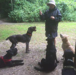 Hundetraining im Regen