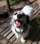 Hund im Hundetraining